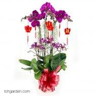 CNY-Phalaenopsis-Special-Purple-6-in-1.jpg