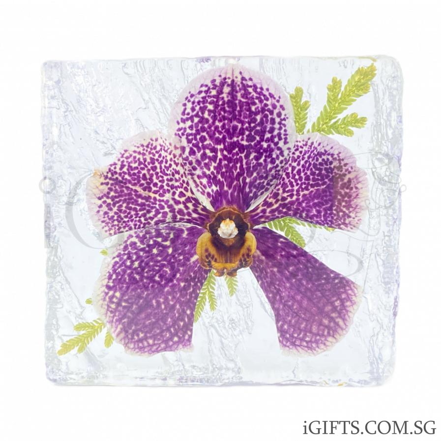 Papilionanda Freddy Boey Orchid Crystal