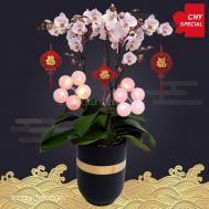 CNY Special Pink Phalaenopsis Orchids (3 in 1)