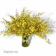 Golden Shower Flower Arrangement