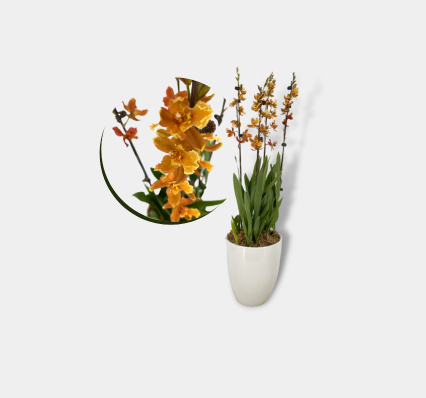 Oncidium Arrangement Banner