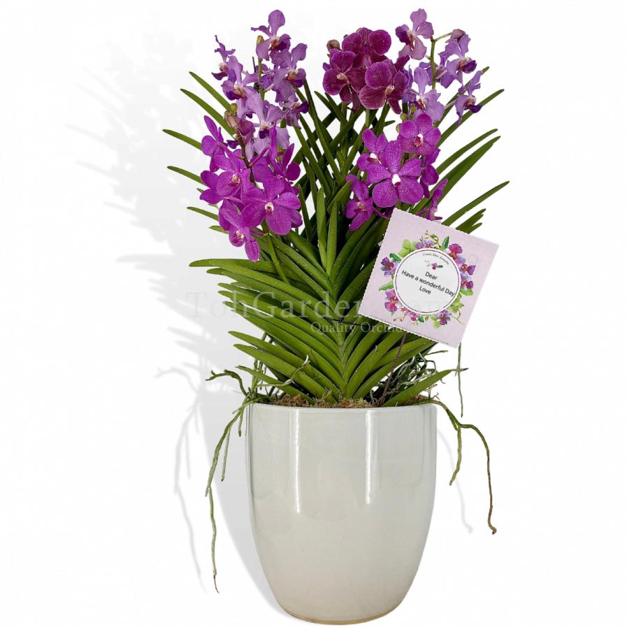 (5 in 1) Purple Aranda & Papilionanda Mix in White Ceramic Pot