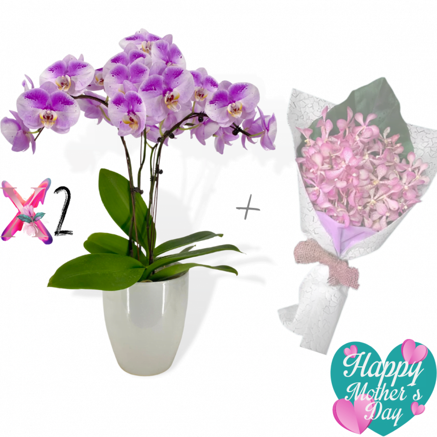 Two Sets of Oriental Beauty Phalaenopsis Arrangement (3 in 1) With a Bouquet