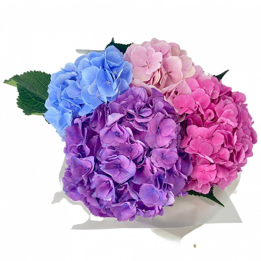 Korea Hydrangea Bouquet (Seasonal)