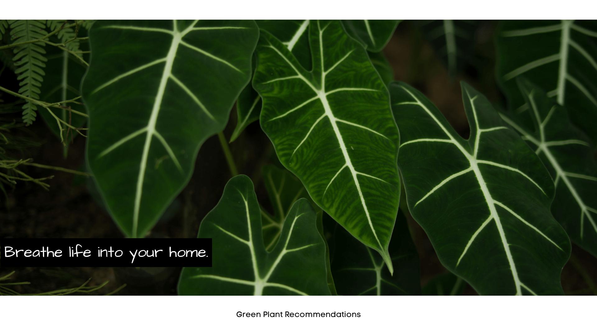 Green Plants Banner