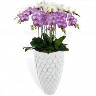 Phalaenopsis in Merlion Inspired Pot