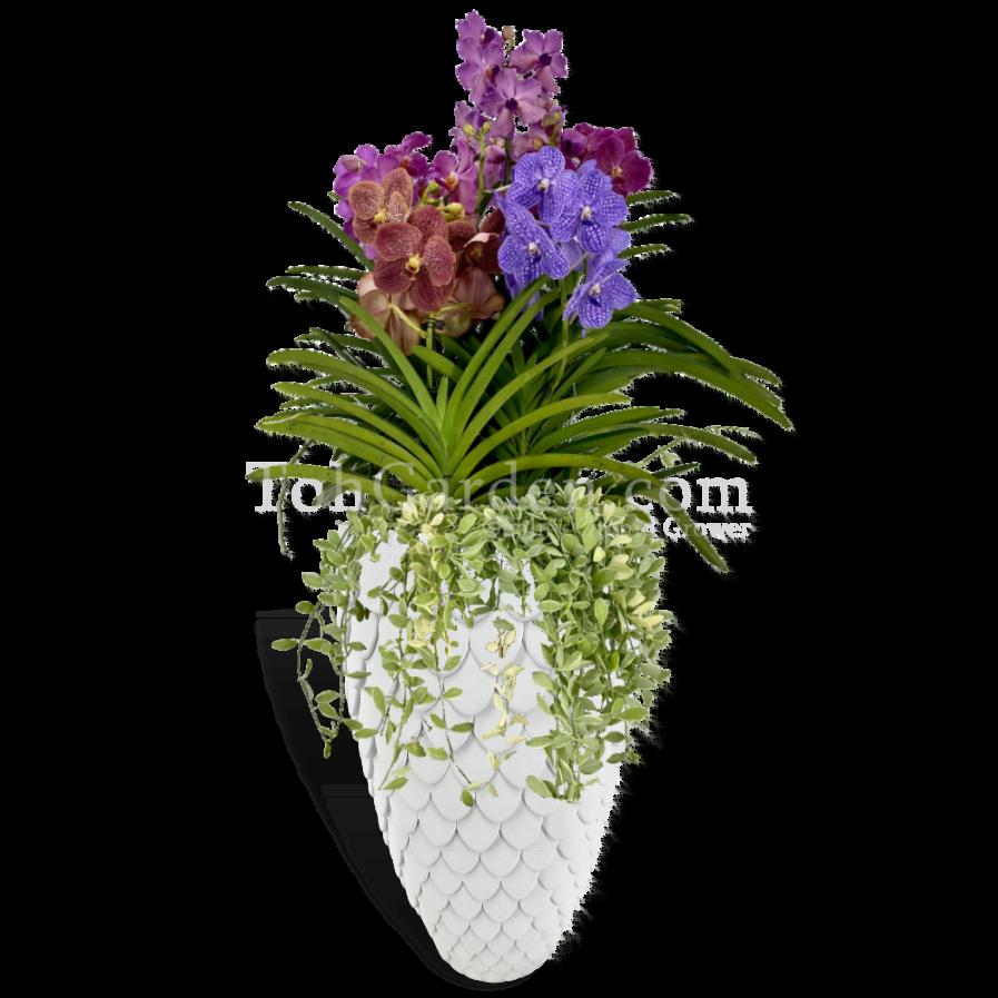 Vanda Arrangement in Merlion Inspired Pot