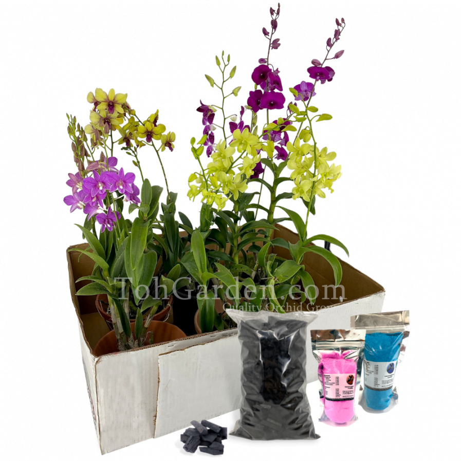 Mix Dendrobium Bundle (Free fertilizers / Hardwood Charcoal)