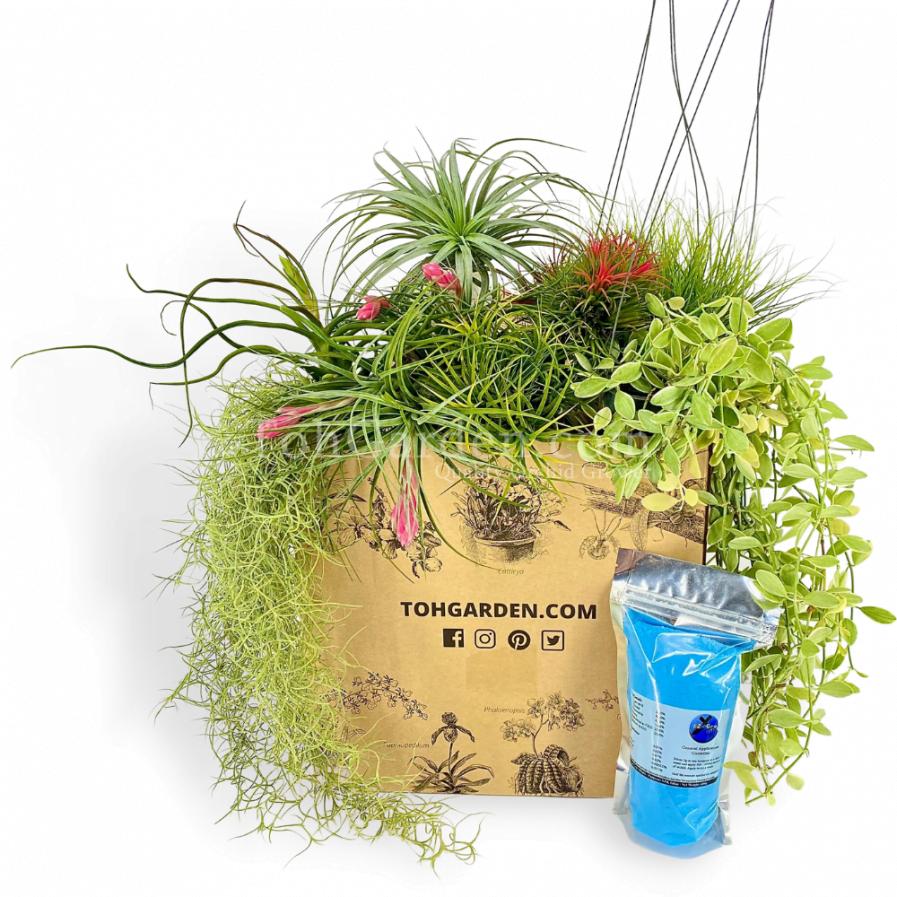 Mix Airplant Bundle (Free fertilizer)