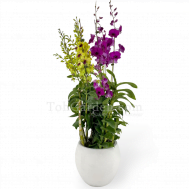 Dendrobium with White Fiberglass Pot (6 in 1)